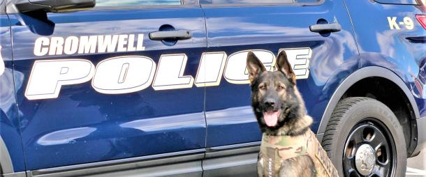 k9 Bane in front of a Cromwell Police car